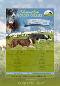 mockup Border Collies 209x300 - Webgrafiken
