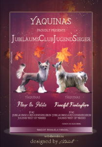 advert Chinese Crested 2  209x300 - Webgrafiken
