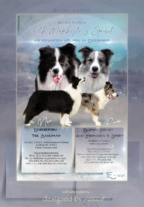 ad Border Collie3 1 209x300 - Webgrafiken