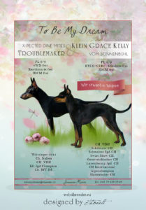 ad english toy terrier 209x300 - Webgrafiken