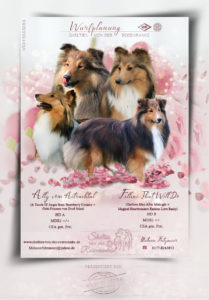 ad collies 209x300 - Webgrafiken